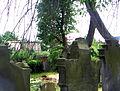 Kamienna Góra, cmentarz żydowskiPICT6600.JPG