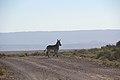 Karoo National Park 2014 31.jpg