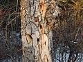 Kerry Wood Nature Conservatory (32856098551).jpg