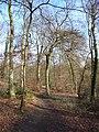 King's Wood - geograph.org.uk - 147688.jpg