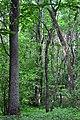 Kivertsi Volynska-Kivertsivska dacha-1 protected tract-in the northern part.jpg