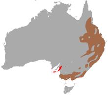 carte d'Australie montrant la distribution du Koala