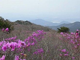 Dalseong County - Image: Korea Mount Biseul Azalea Valley 01