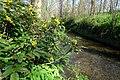 Korina 2016-04-21 Mahonia aquifolium 1.jpg