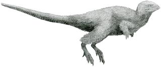 <i>Kulindadromeus</i>