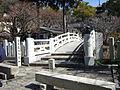 Kurotai-nt-4663.JPG