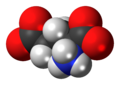 L-Glutamic-acid-anion-3D-spacefill.png