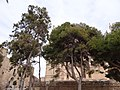 La Seu, 07001 Palma, Illes Balears, Spain - panoramio (127).jpg
