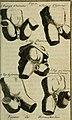 La generation de l'homme; ou, Tableau de l'amour conjugal, considéré dans l'état du mariage (1751) (14777662452).jpg