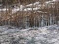 Lago di Comabbio 3760.JPG