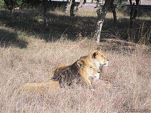 English: safari park lahore, pakistan
