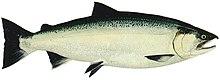Fish Oil Vitamins Whole Foods