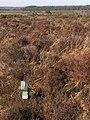 Land restoration trials, New Forest - geograph.org.uk - 375077.jpg