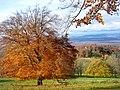 Landschaftsschutzgebiet Schönberg, WDPA ID 324240. Blick auf die Ruine der Schneeburg und in die Rheinebene.jpg