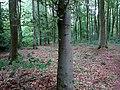 Landschaftsschutzgebiet Waldgebiete bei Dielingdorf und Handarpe LSG OS 00025 Datei 17.jpg