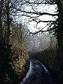 Lane, Doddiscombsleigh - geograph.org.uk - 689610.jpg