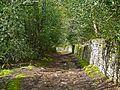 Lane in Shipley Glen (2487862880).jpg