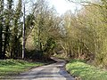 Lane near Mabb's Farm, Littley Green, Essex (geograph 3358601).jpg