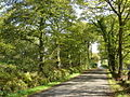 Lane outside Maesbach Caravan and Camping Park - geograph.org.uk - 334413.jpg