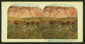 Last Remnants of the American Bison, Yellowstone National Park, U. S. A, by A.C. Co..png