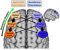 Lateralized organization of superior, lateral prefrontal cortex with regard to the hierarchical model of motivation.jpg