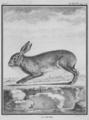 Le Lievre - Hare - Lepus europaeus - Gallica - ark 12148-btv1b2300253d-f40.png