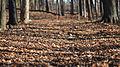 Leaf Litter - Guelph, Ontario.jpg