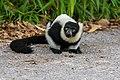 Lemur (36500015613).jpg