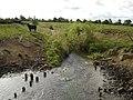 Lendales Drain - geograph.org.uk - 2001515.jpg