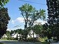 Les arbres centenaire - panoramio.jpg