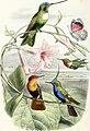 Lettres à Julie sur l'ornithologie (1868) (14748208874).jpg