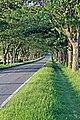 Lever Causeway, Storeton (geograph 2966324).jpg