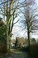 Linden als welkomstbomen te Zwalm - 372201 - onroerenderfgoed.jpg