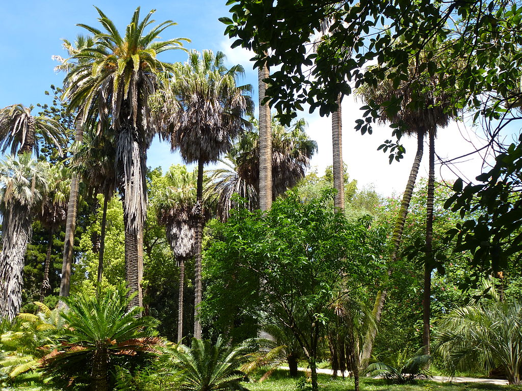 Jardin botanique de Lisbonne - Photo de Salix