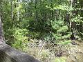 Little River Trail 05, Reed Bingham Park.JPG