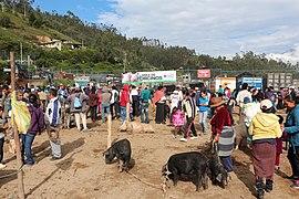 Livestock market, Otavalo 02.jpg