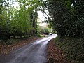 Local byway near Studland - geograph.org.uk - 268689.jpg