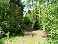 Logging Track, Houghton Moor - geograph.org.uk - 181403.jpg