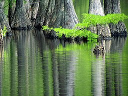 Image Result For Spring Lake Nc