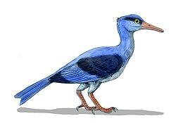 Longipteryx BW.jpg