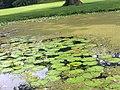 Los puentes de las ranas.jpg