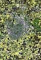 Lubbock satellite map aeria.jpg