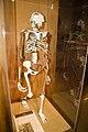 Lucy Skeleton.jpg