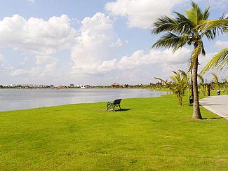 Freŝe verda herbo laŭ la lake.jpg
