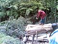 Lushoto lumbering 2.jpg