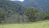 A small group of horses just visible at the end of a field with tall forested hills behind them