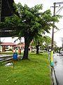 Magallanes,Kabitejf8070 11.JPG