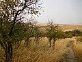 Magpie Forest (36887100142).jpg