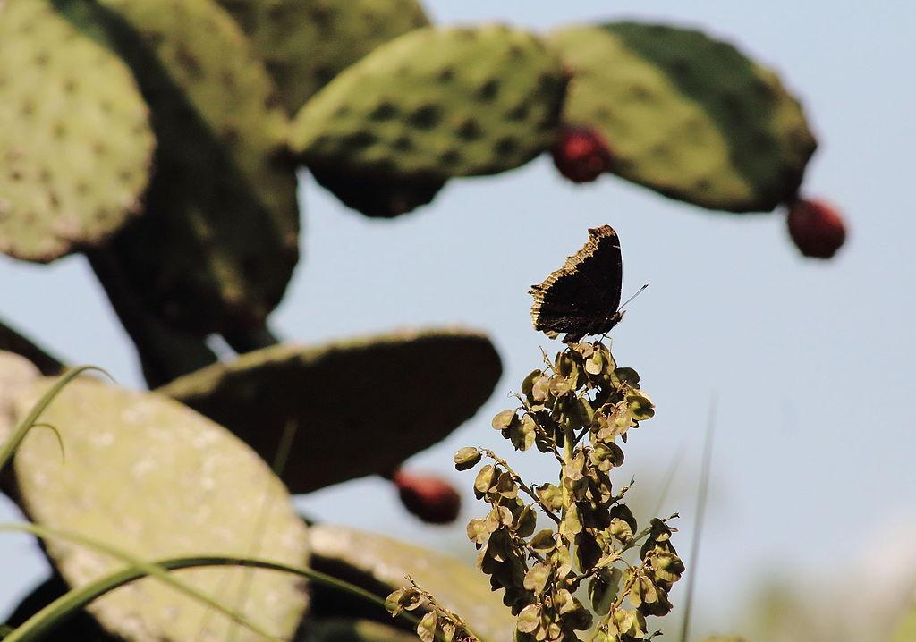 Jardín Botánico de la UNAM, patrimonio de la biodiversidad mexicana