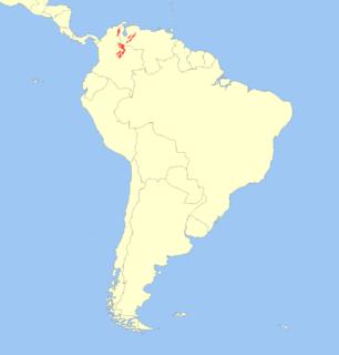 Mérida brocket species of mammal